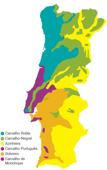 mapa de solos de portugal Floresta em Perigo   Floresta   PÚBLICO mapa de solos de portugal